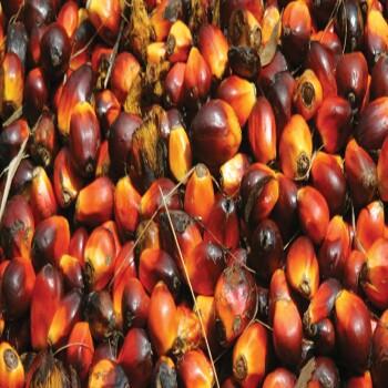 palm-oil-700×350-350×350