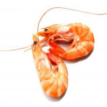 shrimps_prawns-350×350