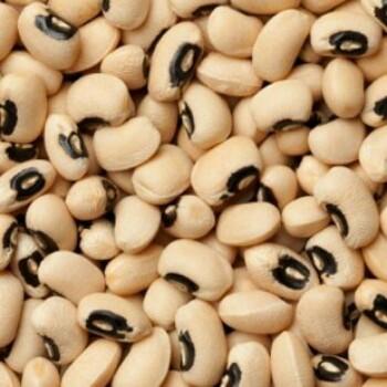 beans-3-1-350×350