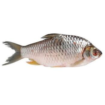 frozen-fish-500×500-350×350